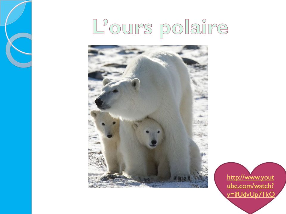 L'ours polaire http://www.youtube.com/watch v=ifUdvUp71kQ