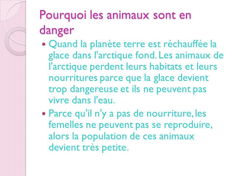 Pourquoi les animaux sont en danger