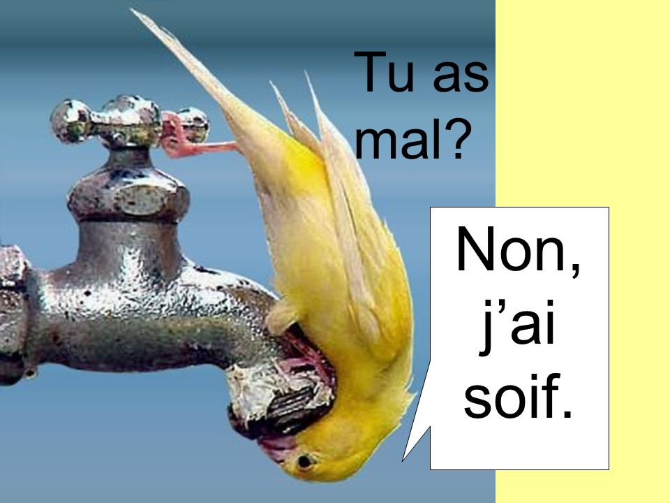 Tu as mal Non, j'ai soif.