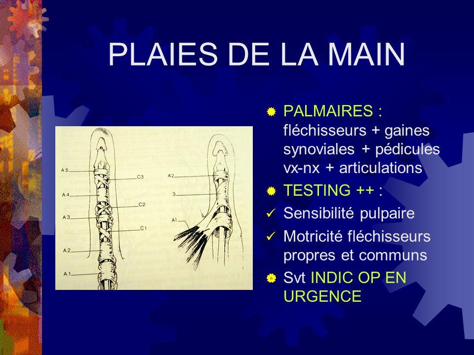 PLAIES DE LA MAIN PALMAIRES : fléchisseurs + gaines synoviales + pédicules vx-nx + articulations. TESTING ++ :