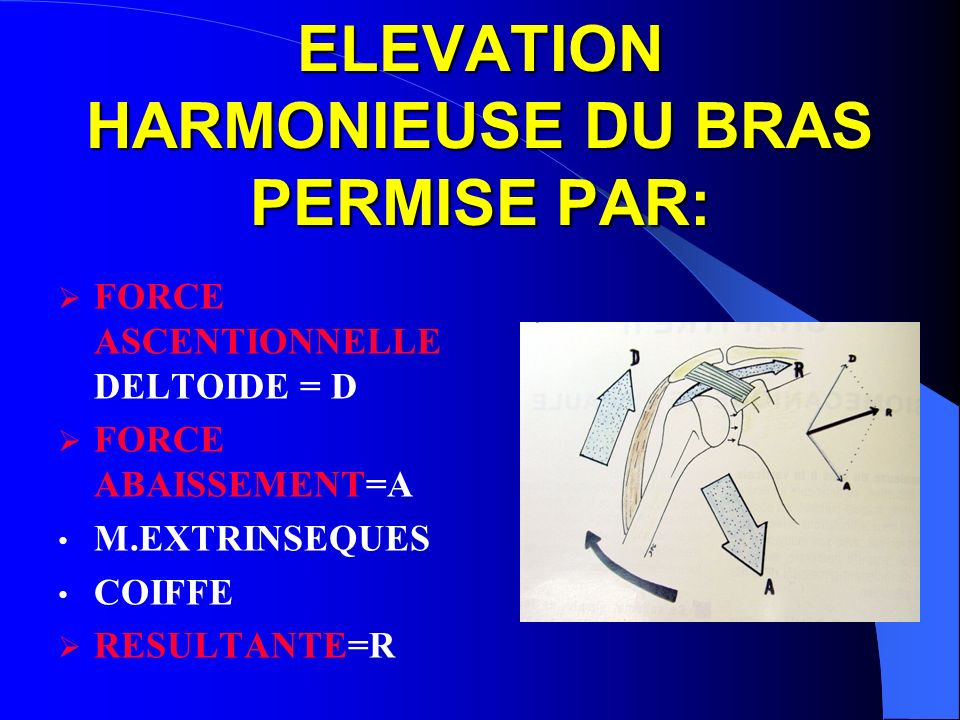 ELEVATION HARMONIEUSE DU BRAS PERMISE PAR: