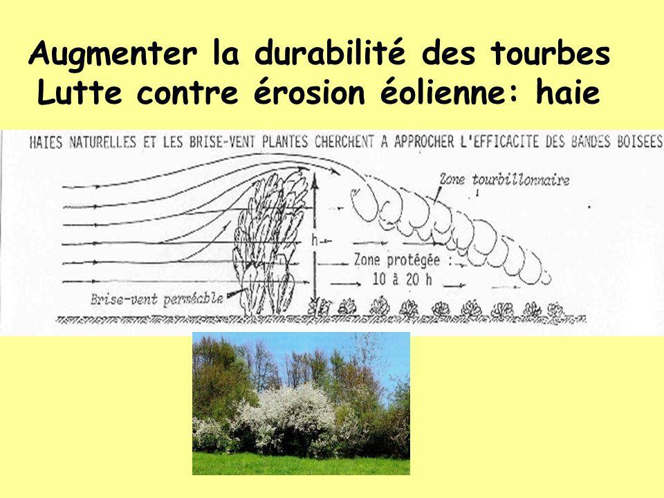 Augmenter la durabilité des tourbes Lutte contre érosion éolienne: haie