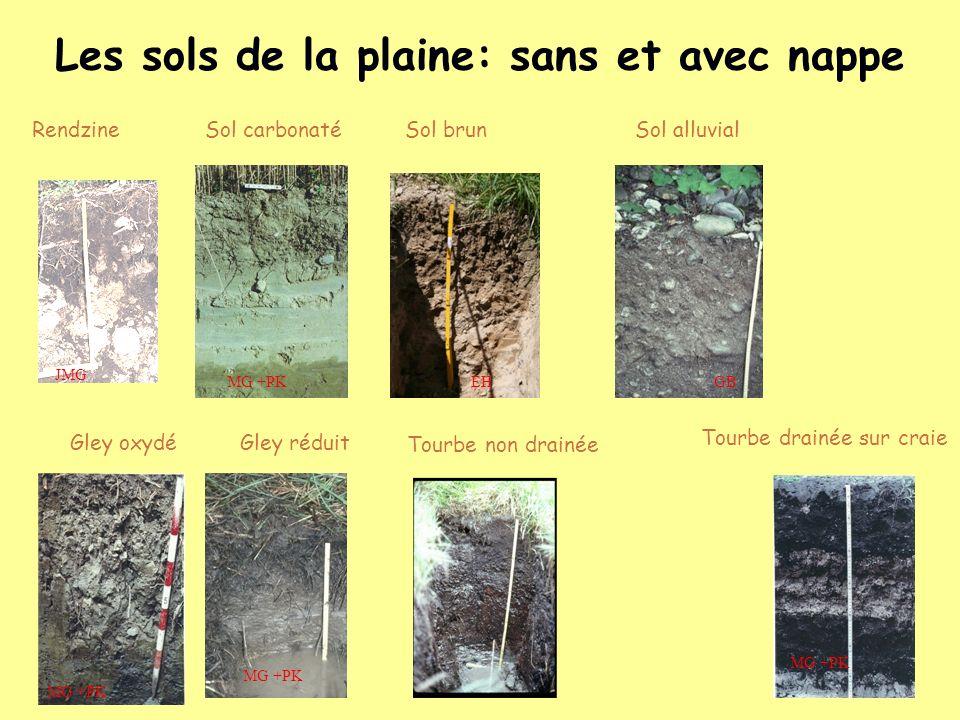 Les sols de la plaine: sans et avec nappe
