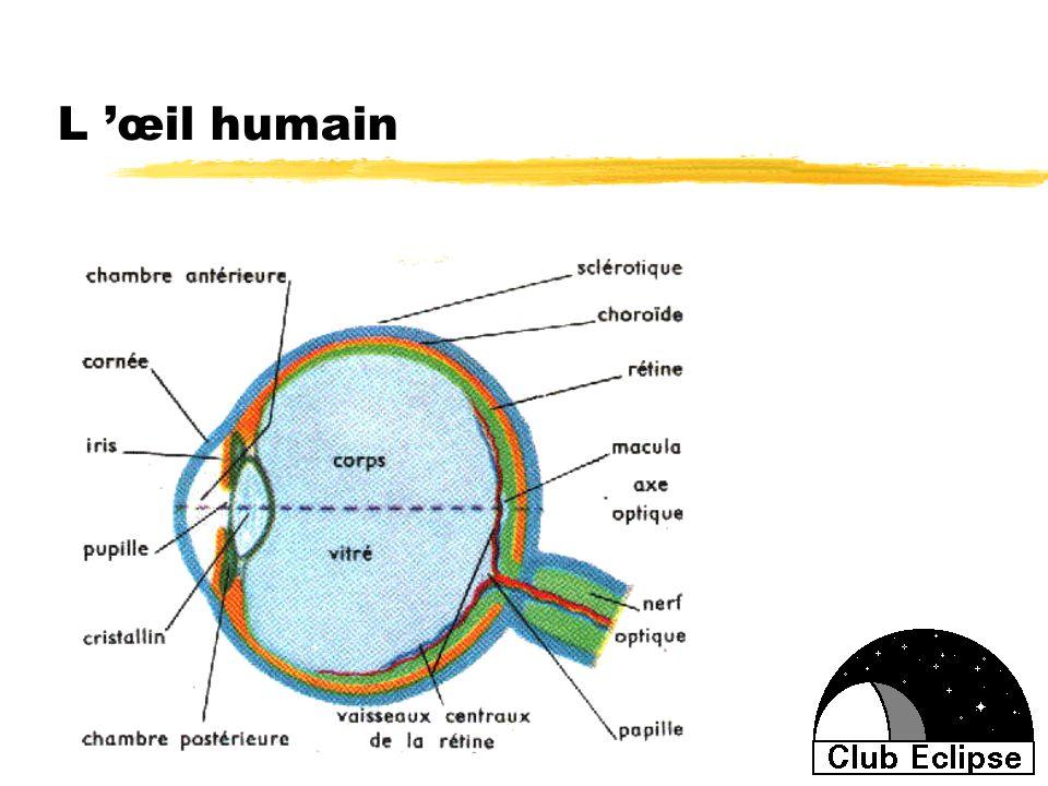 L 'œil humain