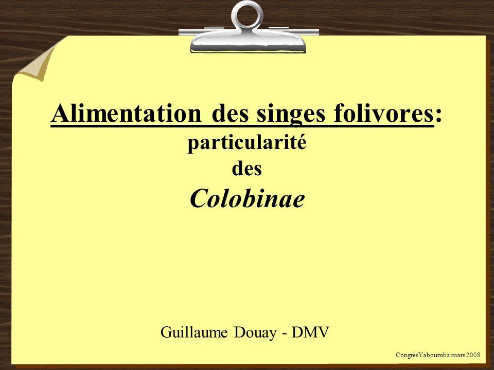 Alimentation des singes folivores: particularité des Colobinae