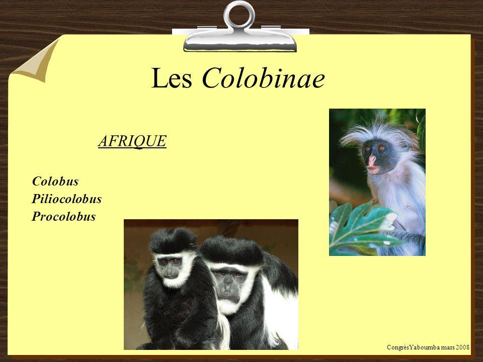Les Colobinae AFRIQUE Colobus Piliocolobus Procolobus