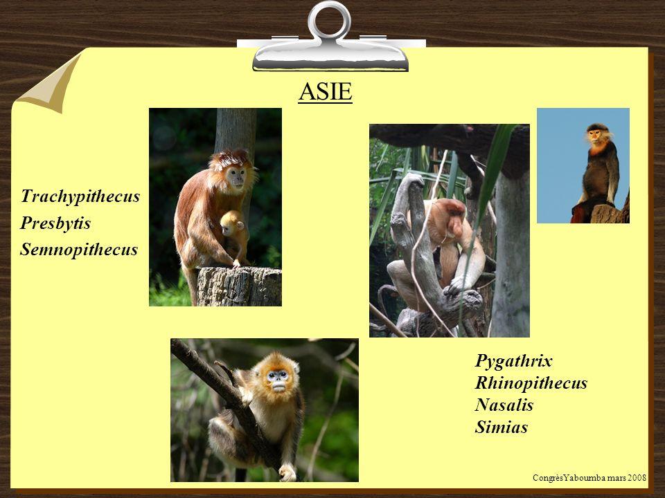 ASIE Trachypithecus Presbytis Semnopithecus Pygathrix Rhinopithecus