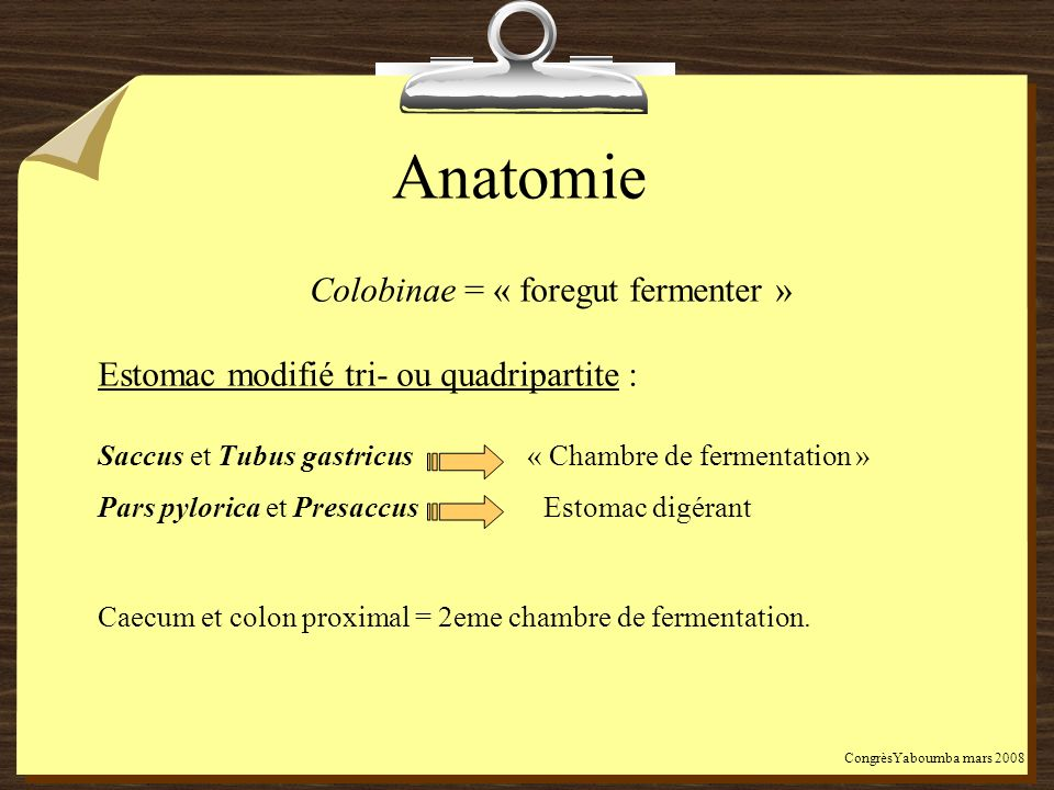 Colobinae = « foregut fermenter »