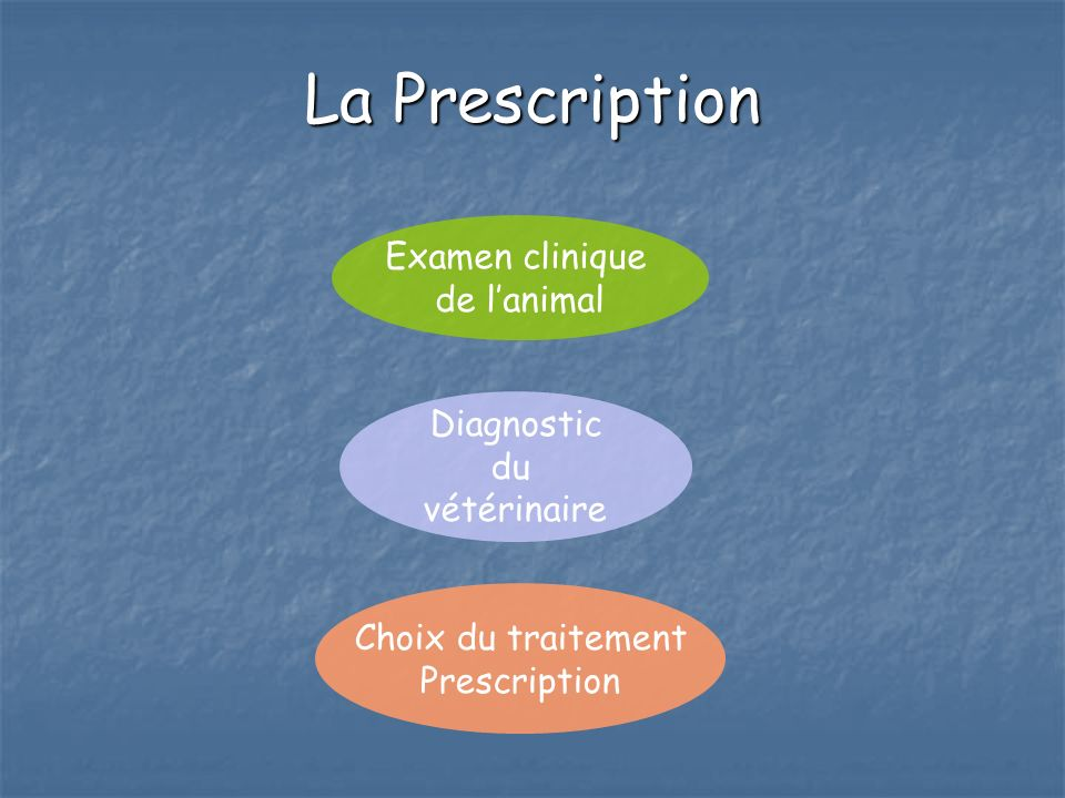 La Prescription Examen clinique de l'animal Diagnostic du vétérinaire