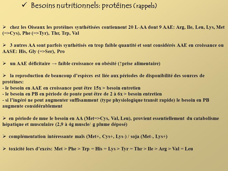 Besoins nutritionnels: protéines (rappels)