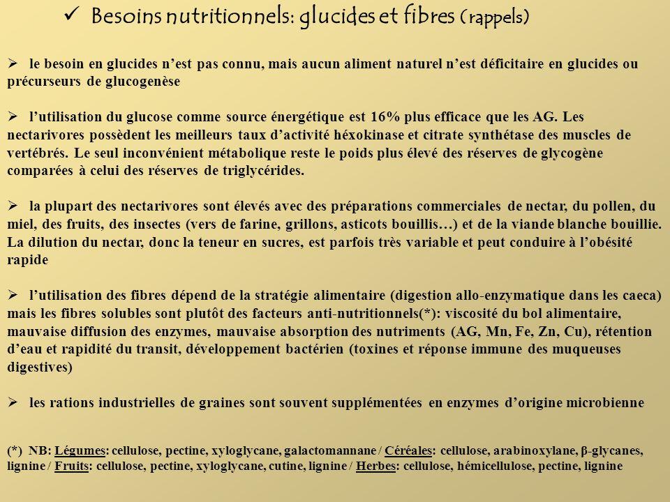 Besoins nutritionnels: glucides et fibres (rappels)