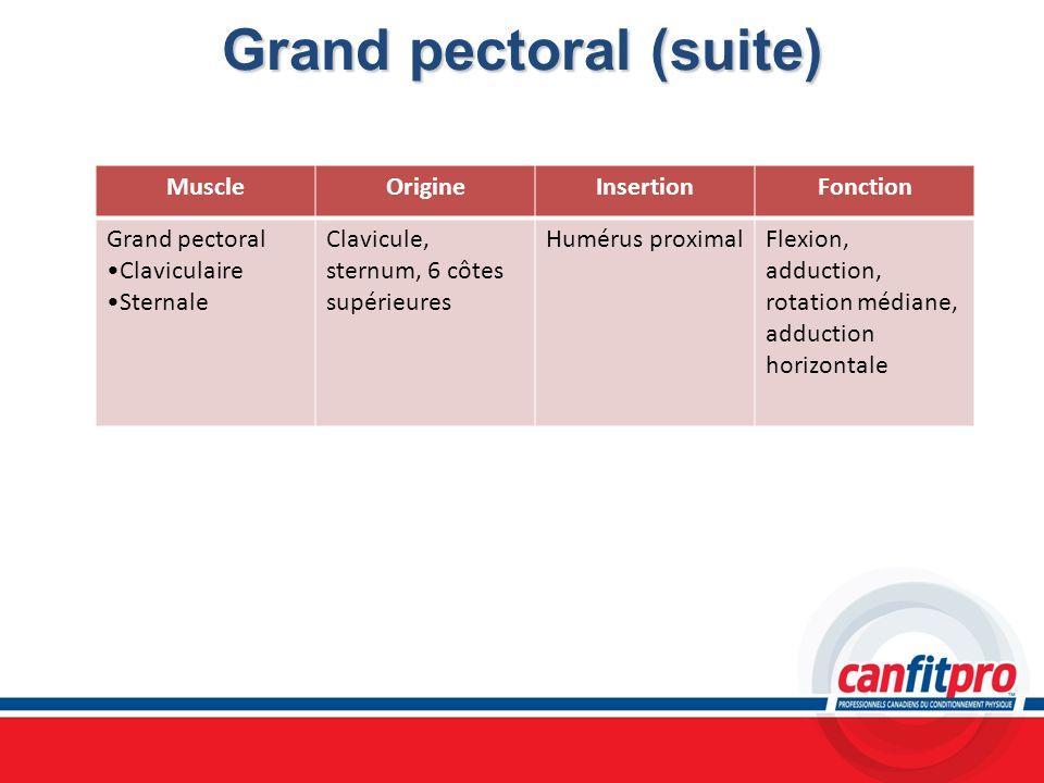 Grand pectoral (suite)