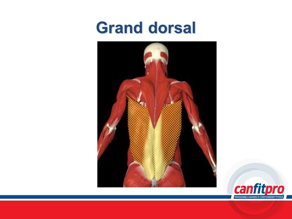 Grand dorsal Chapitre 6 Titre: Concepts musculaires