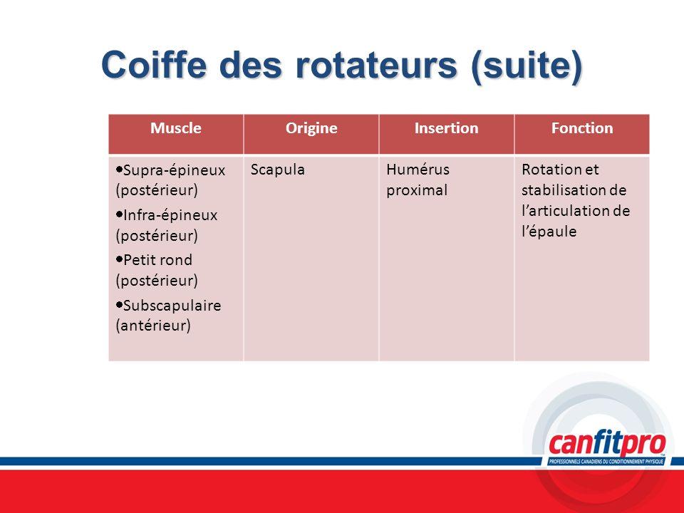 Coiffe des rotateurs (suite)