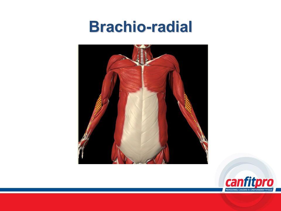 Brachio-radial Chapitre 6 Titre: Concepts musculaires