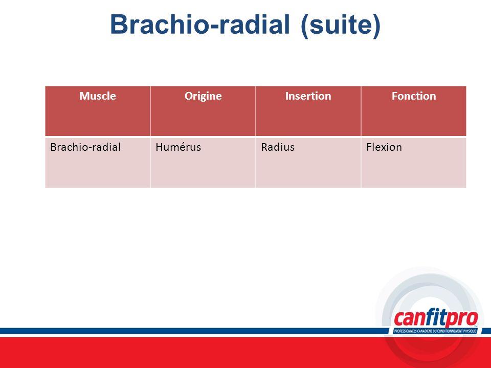 Brachio-radial (suite)