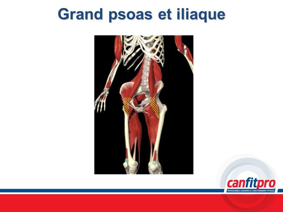 Grand psoas et iliaque Chapitre 6 Titre: Concepts musculaires