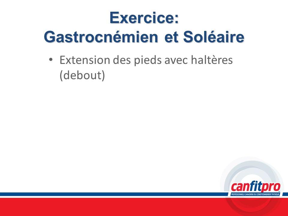 Exercice: Gastrocnémien et Soléaire