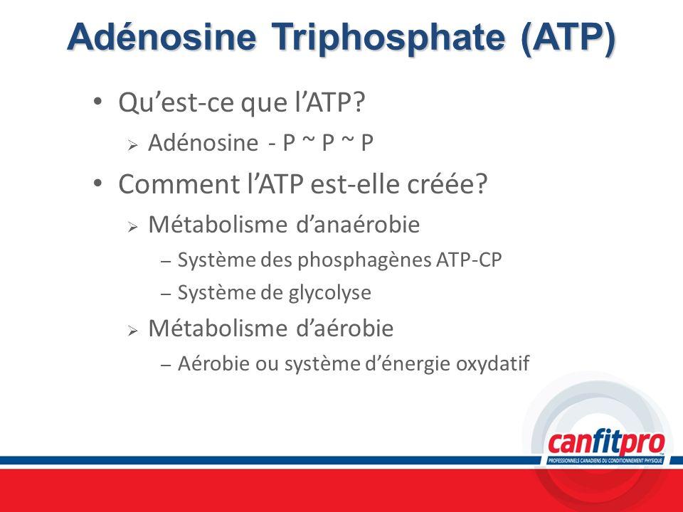 Adénosine Triphosphate (ATP)