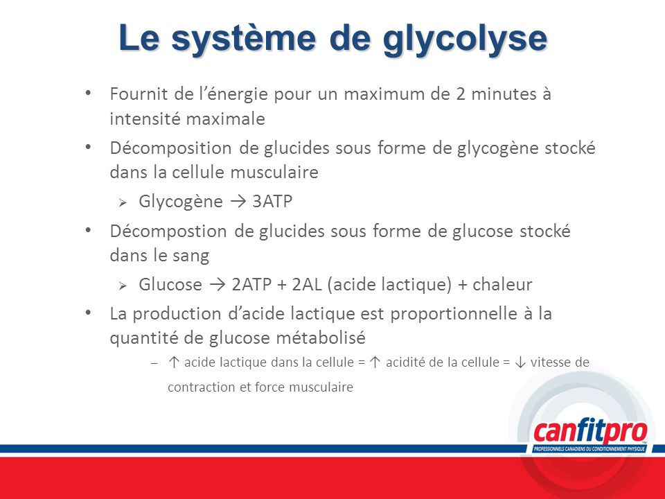 Le système de glycolyse
