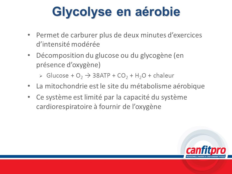 Glycolyse en aérobiePermet de carburer plus de deux minutes d'exercices d'intensité modérée.