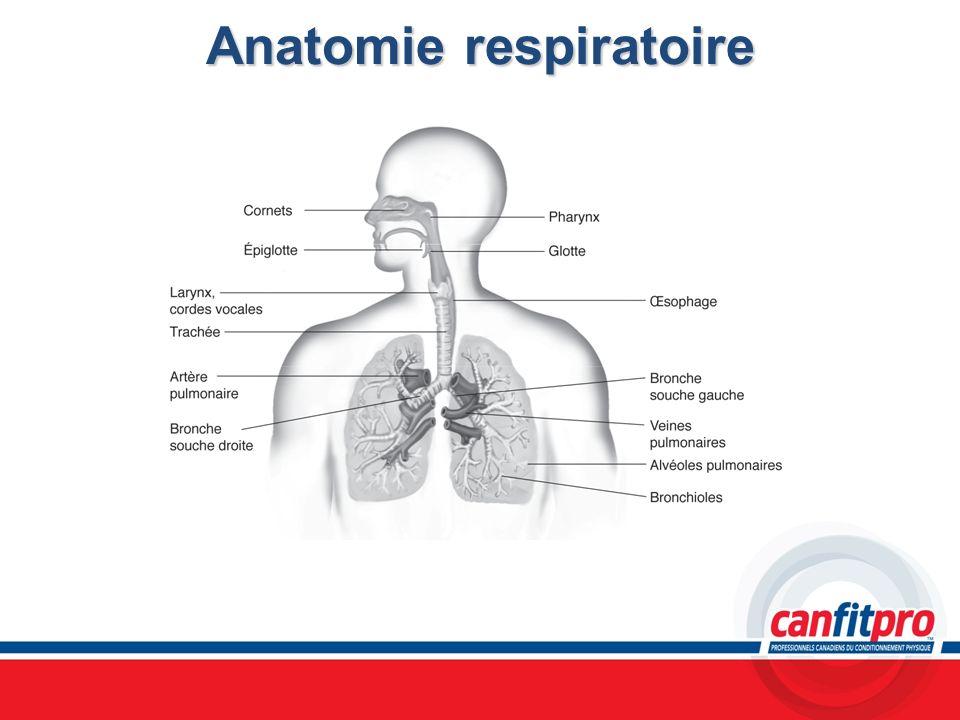 Anatomie respiratoire