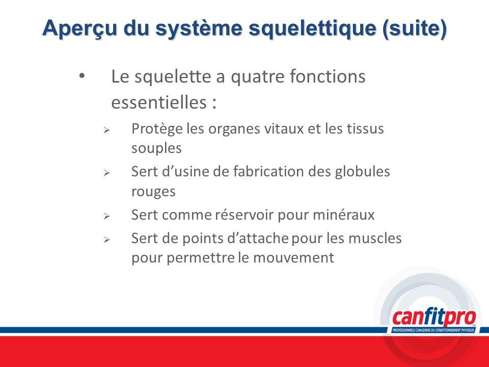 Aperçu du système squelettique (suite)