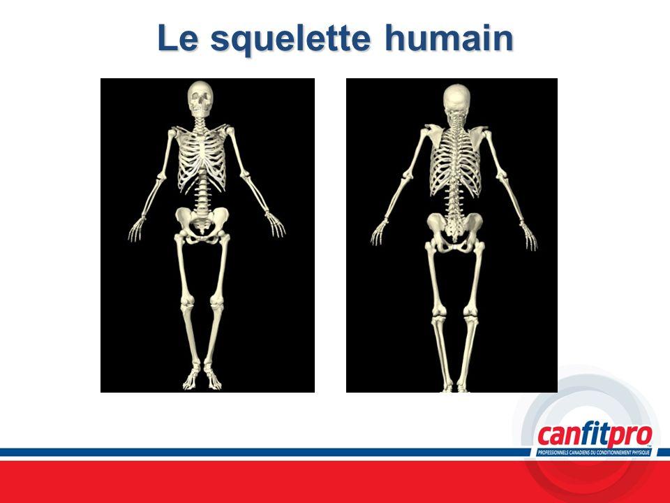 Le squelette humain Chapitre 5