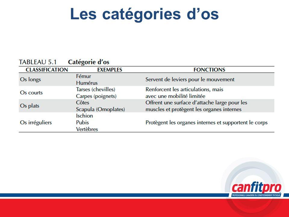 Les catégories d'os Chapitre 5