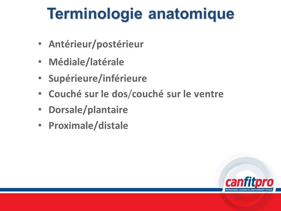 Terminologie anatomique