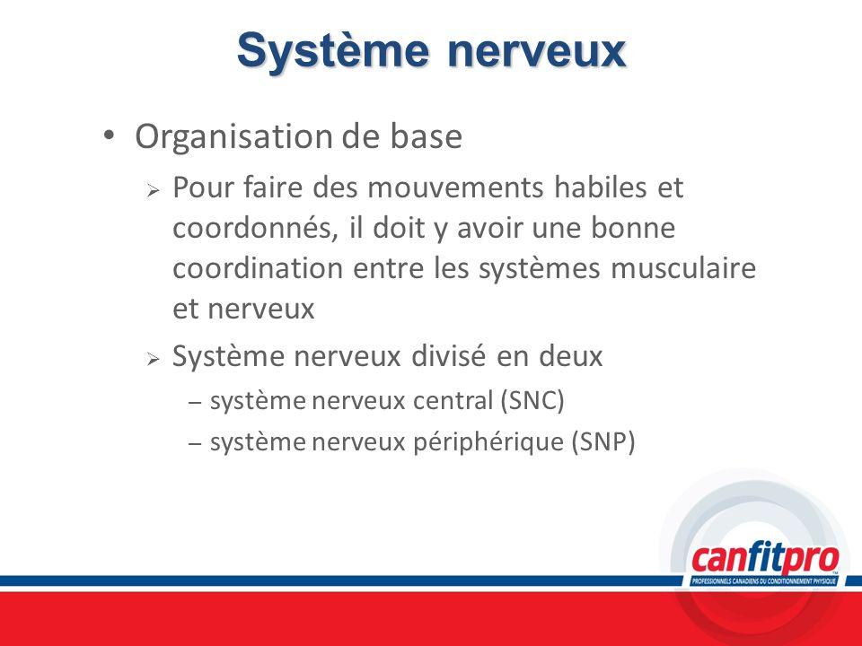 Système nerveux Organisation de base