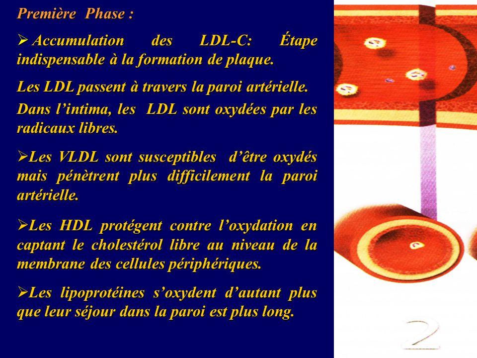 Première Phase :Accumulation des LDL-C: Étape indispensable à la formation de plaque. Les LDL passent à travers la paroi artérielle.