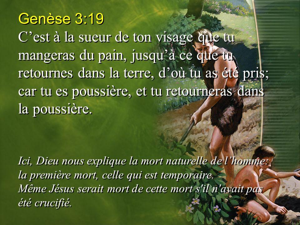 Genèse 3:19