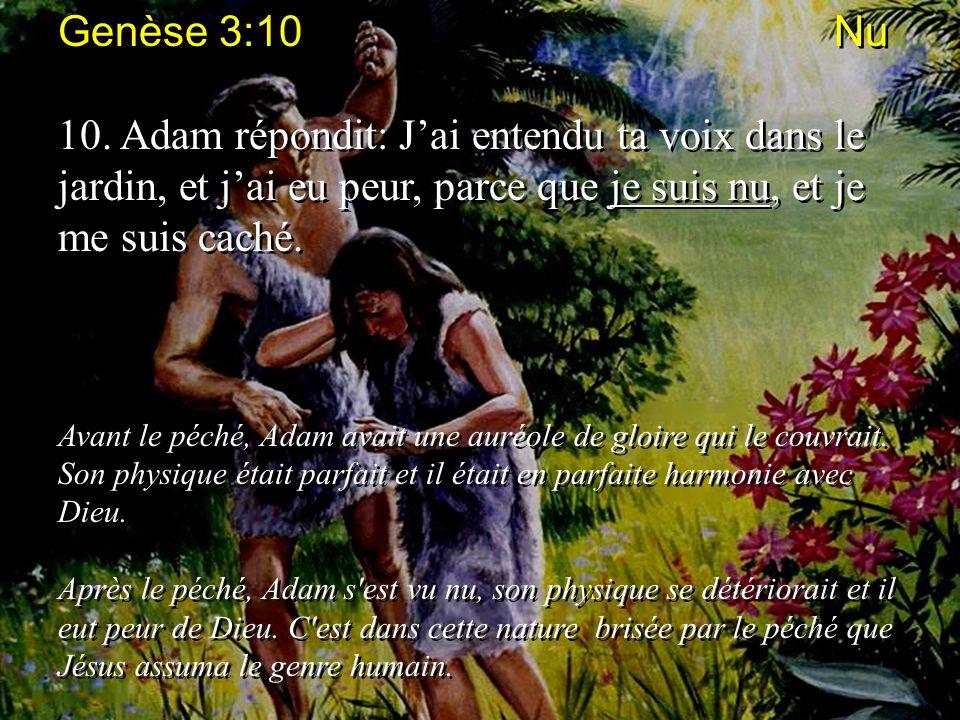 Genèse 3:10 Nu