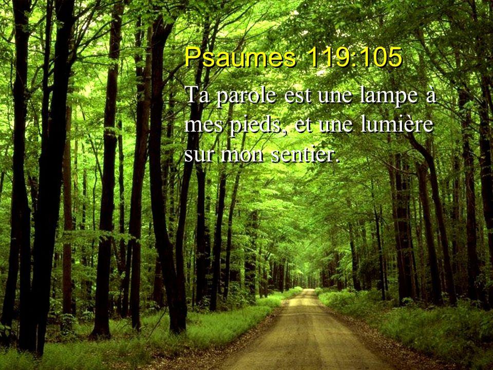 Psaumes 119:105 Ta parole est une lampe à mes pieds, et une lumière sur mon sentier.