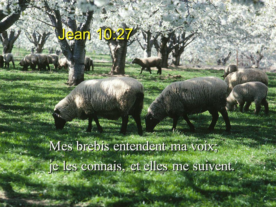 Jean 10:27 Mes brebis entendent ma voix;