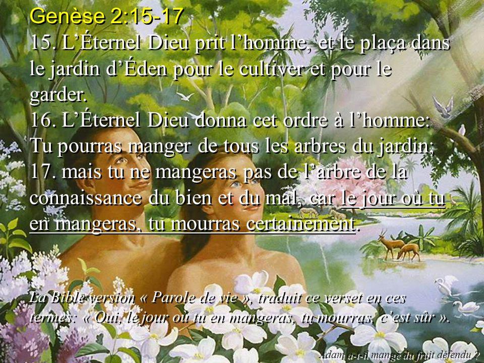 Genèse 2:15-17 15. L'Éternel Dieu prit l'homme, et le plaça dans le jardin d'Éden pour le cultiver et pour le garder.