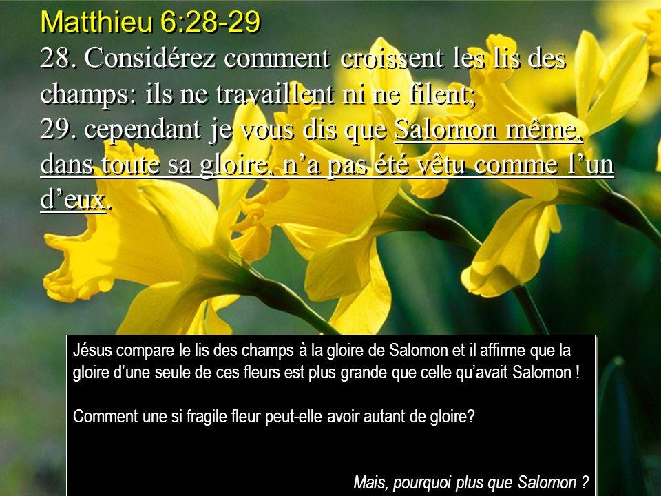 Matthieu 6:28-29 28. Considérez comment croissent les lis des champs: ils ne travaillent ni ne filent;