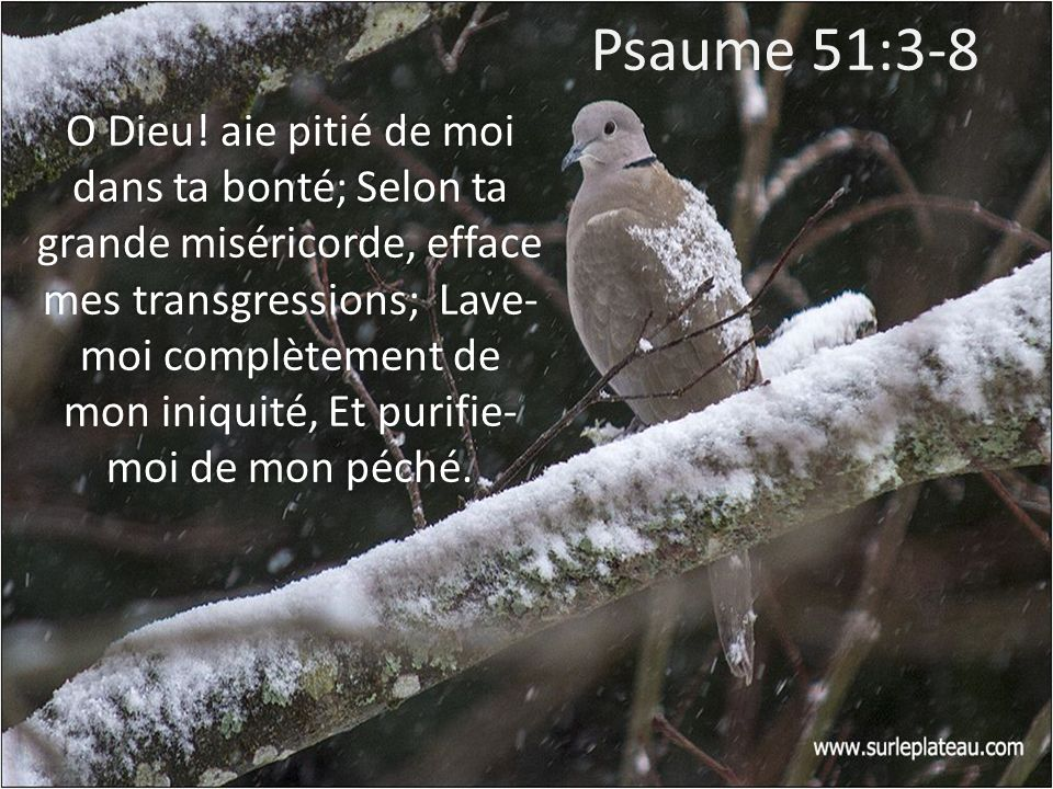 Psaume 51:3-8