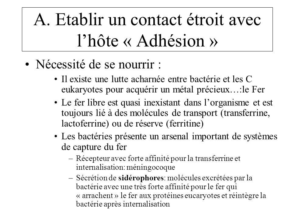 A. Etablir un contact étroit avec l'hôte « Adhésion »