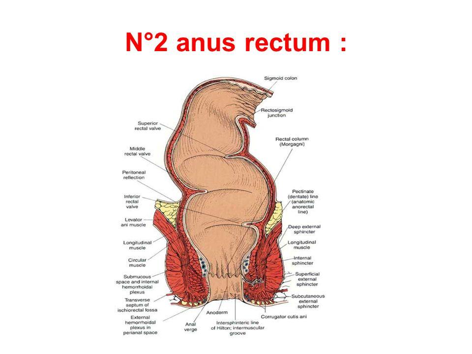 N°2 anus rectum :