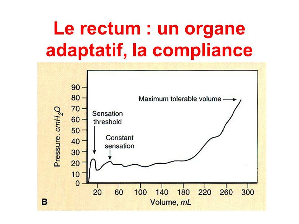 Le rectum : un organe adaptatif, la compliance