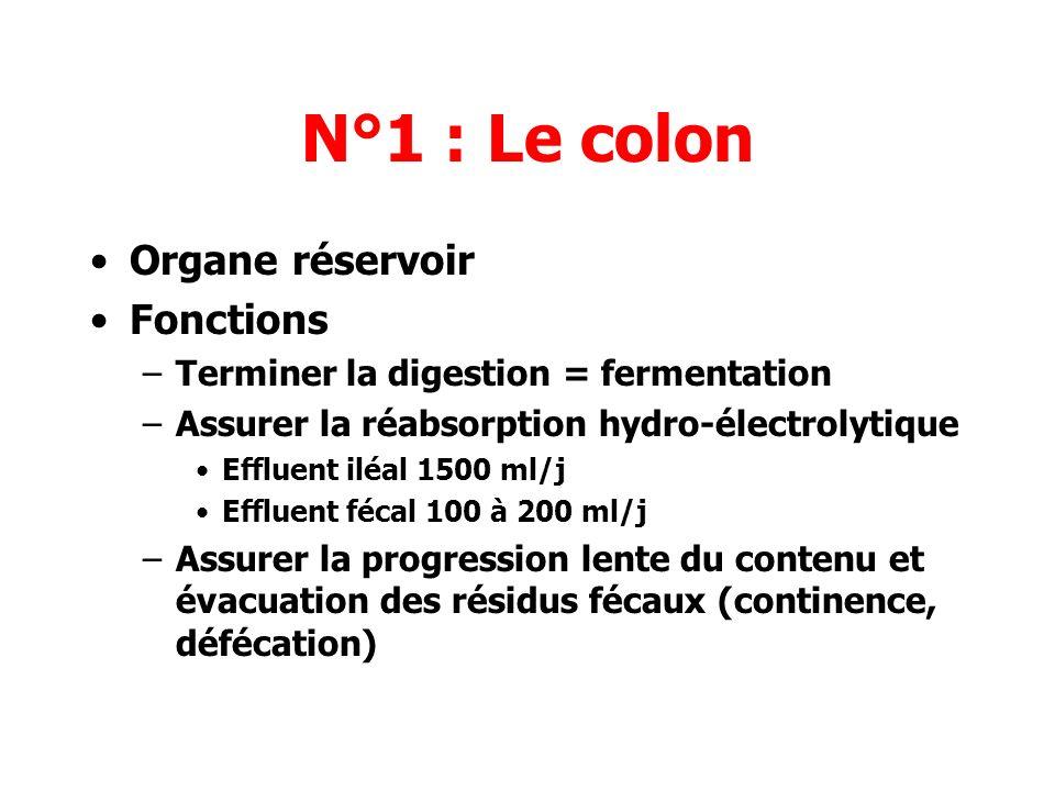 N°1 : Le colon Organe réservoir Fonctions