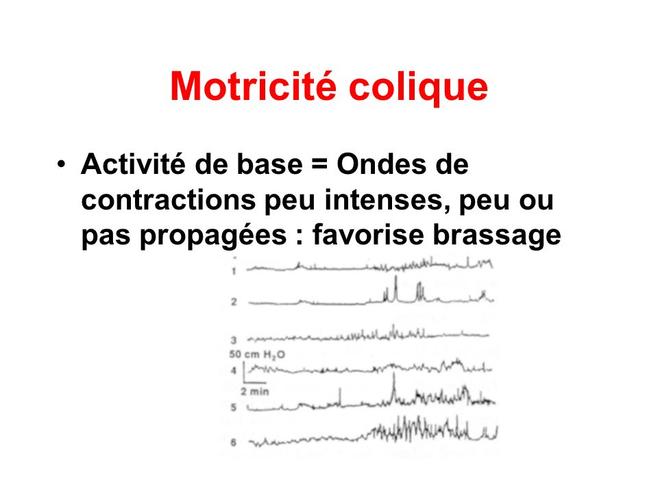 Motricité coliqueActivité de base = Ondes de contractions peu intenses, peu ou pas propagées : favorise brassage.
