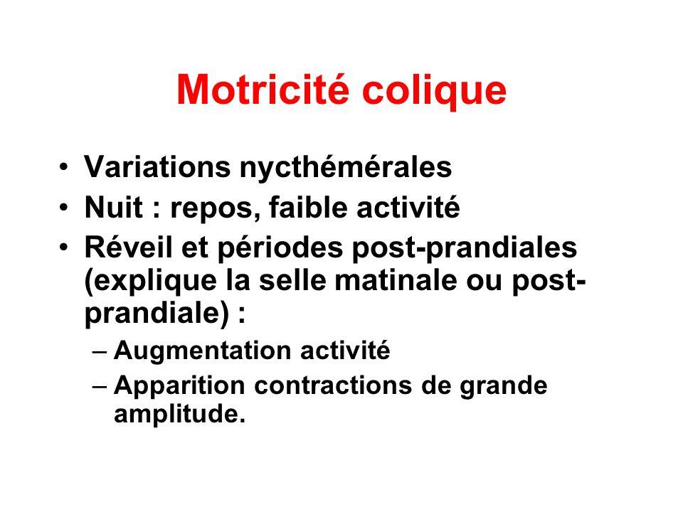 Motricité colique Variations nycthémérales