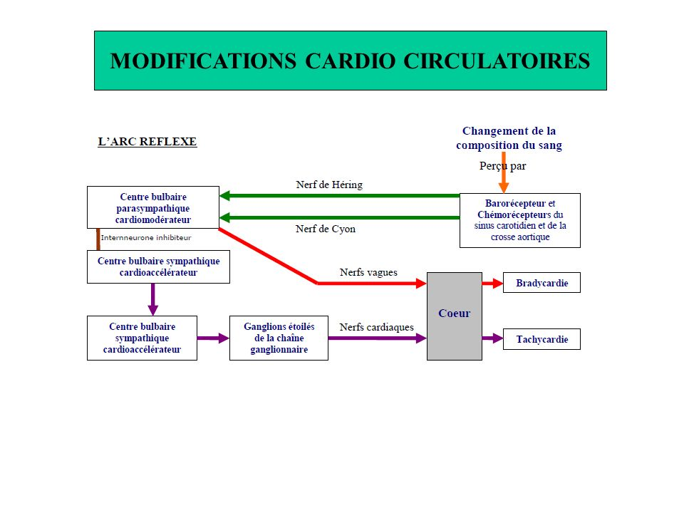 MODIFICATIONS CARDIO CIRCULATOIRES