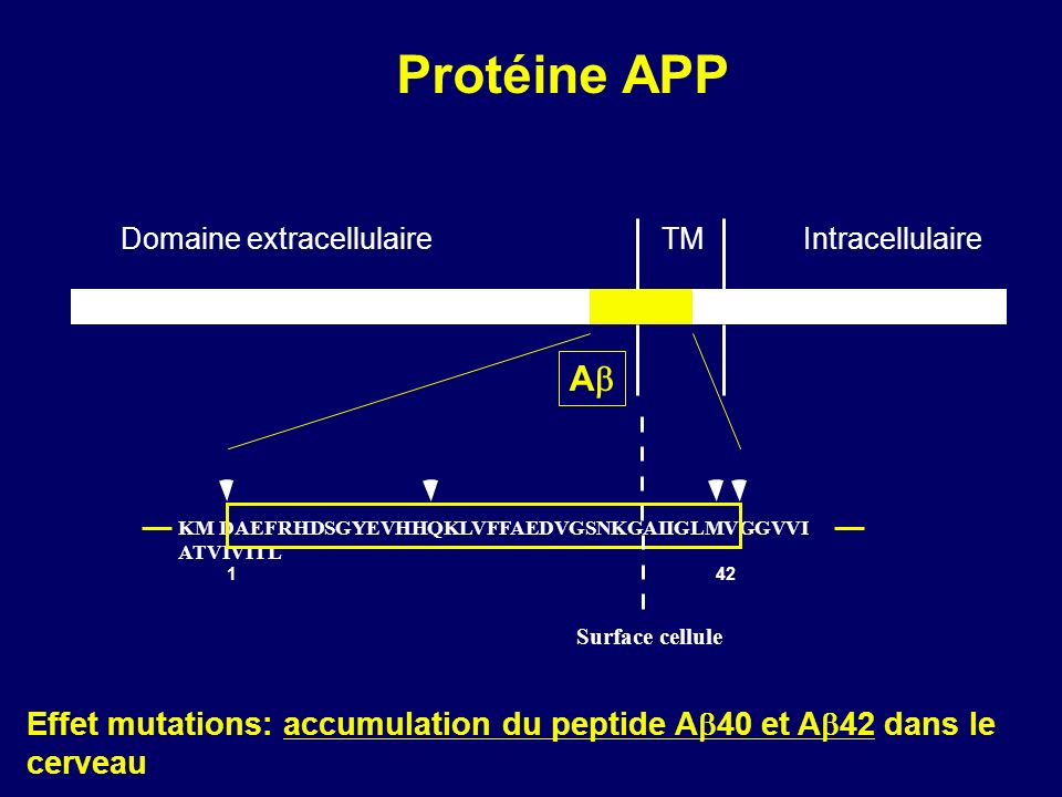 Protéine APP Domaine extracellulaire. TM. Intracellulaire. Ab. KM DAEFRHDSGYEVHHQKLVFFAEDVGSNKGAIIGLMVGGVVI ATVIVITL.