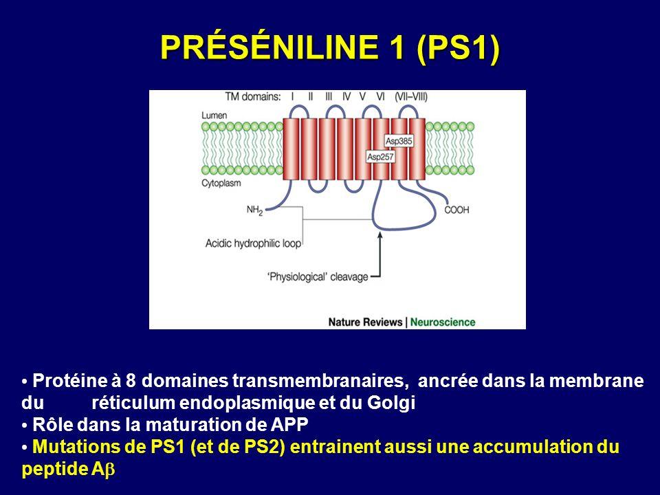 PRÉSÉNILINE 1 (PS1) Protéine à 8 domaines transmembranaires, ancrée dans la membrane du réticulum endoplasmique et du Golgi.