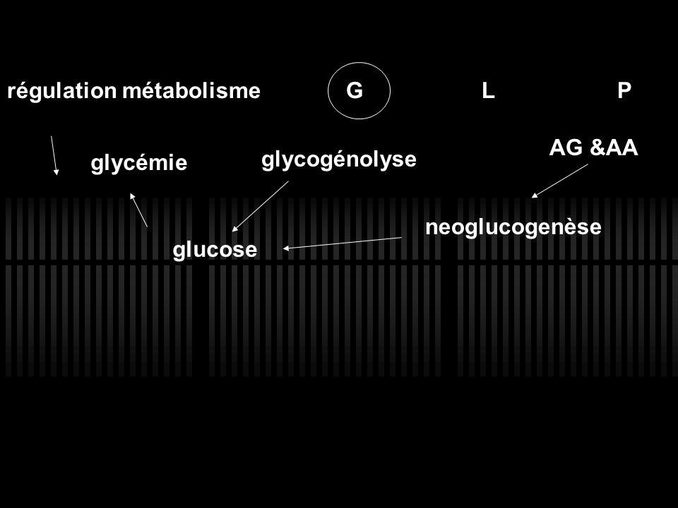 régulation métabolisme G L P