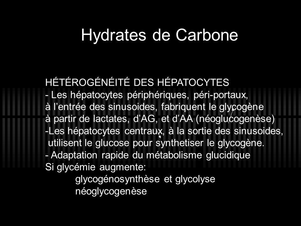 Hydrates de Carbone HÉTÉROGÉNÉITÉ DES HÉPATOCYTES